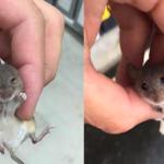ホームセンターでネズミが…ペット売り場から逃げたと思い、店員さんに返そうとすると…