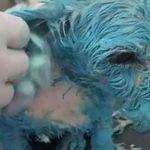 青いペンキをかけられ虐待死した子犬…無残な虐待事件がSNSの投稿画像で発覚…