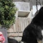11年間愛する人の墓を守り続けた忠犬…生き様がまるでハチ公だと話題に…
