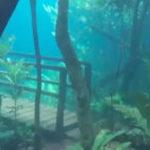 洪水で水の中に沈んだ森の動画…心を奪われる幻想的な世界だと話題に…