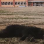 野生の熊に観光客が何気なく与えたソーセージ…その後あってはならない悲劇を招くことに…
