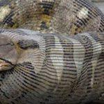 飼い主を食べた危険なペットの動物たち…動物の本能は恐ろしい…