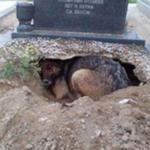墓の前に穴を掘って横たわる犬…犬が必死に守っていた大切なものに感動を覚える…