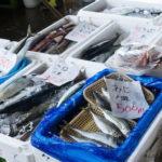 魚を食べない人は死亡リスクが約2倍になる…魚は健康に良いというのは本当だった…