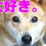 犬が飼い主を大好きな時にする仕草・愛情表現…愛犬がさらに愛おしく感じられると話題に…