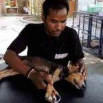 アニマル・エイド・アンリミテッドの活動内容…動物救助のあるべき姿について考えさせられる…