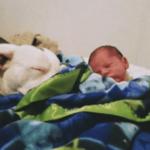 殺人犬と恐れられるピットブル…生後間もない息子に寄り添う光景を多くの人に知ってほしい…