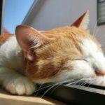 動物病院が教えるお手製の保冷剤…わんちゃん猫ちゃんの暑さ対策が話題に…