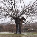 木の幹から大量の水が溢れ出る異様な光景…偶然が重なって起きた自然現象が話題に…