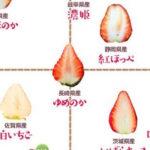 築地市場が作った28種類のイチゴ品種分布図…これは食べ比べしたくなっちゃう…