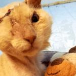 虐待で顔に酸をかけられ片目を失った猫…それでも人間を信頼し助けを求める…