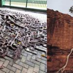 凄すぎて恐ろしい木の生命力8選…自然の生命力は凄いと話題に…