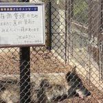 東山動物園の飼育員が描いたオオカミのイラスト…これは和むwと話題に…