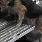 住宅火災で消化活動を続ける中、消防車に近づく1匹の犬の姿に涙を抑えられない…