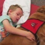 交通事故で植物人間となった6歳の少年を救った一匹の犬が起こした奇跡…