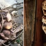 廃墟で発見された恐ろしいもの12選…トラウマになるレベルのものばかりだった…