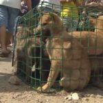中国で行われる犬食祭…世界的批判を受けながら今年も開催…