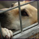 シッポを振りながら殺処分へと向かう子犬…保健所職員の悲痛な叫びに胸が痛む…