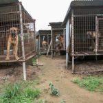 犬肉農場から救出された犬…怯えていた犬が人間の愛に触れたとき・・・