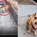 車で犬を散歩させ、排気ガスがワンちゃんに…飼い主の言い分に驚愕してしまう…
