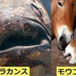 絶滅と思われたところから発見、復活した生き物6選…実は存在していたと話題に…