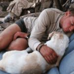 戦地で出会った一匹の犬…任務を終え帰国する兵士が下した処刑覚悟の決断に奇跡が…