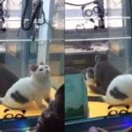 生きたままUFOキャッチャーに入れられた猫3匹…中国で動物へのトンデモ行為が横行…