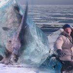 永久凍土から発見された動物4選…絶滅動物がクローンとして蘇る日も近い?と話題に…