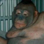 慰安オランウータンの現在…人間用売春猿(300円)の末路…