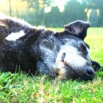 ペットの熱中症にも注意…こんな症状が出たら気をつけて…