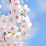 意外と知らない桜・桃・梅の見分け方…一目で納得の画像が話題に…