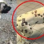 虫刺され痕かと思われた飼い犬の体の傷…本当の理由に言葉を失う…