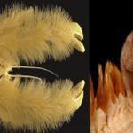 南極に棲んでいる奇妙な生物5選…南極は不思議が一杯だと話題に…